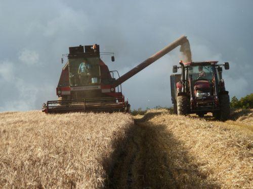 Barley Harvest Under Way